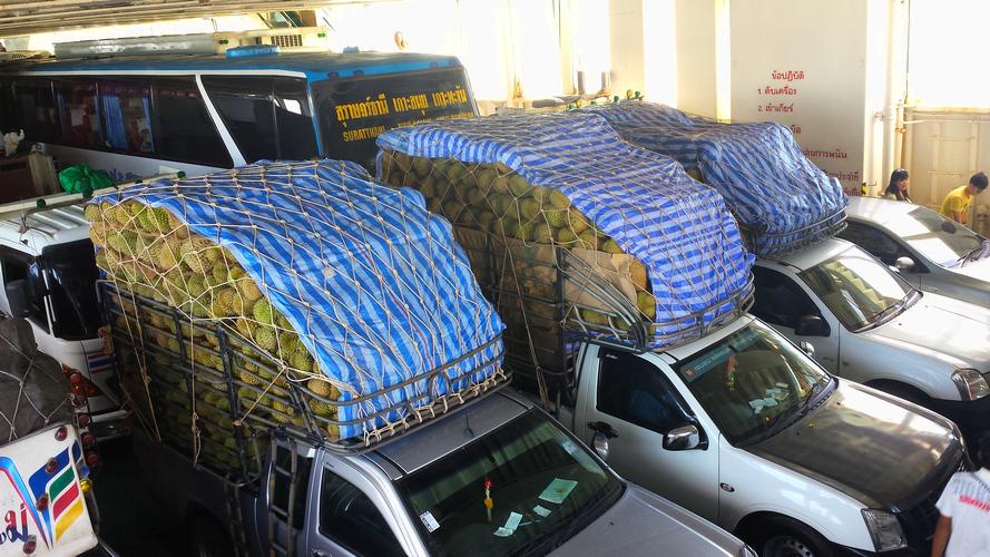 С острова Самуи везут большое количество дурианов на материк в таких машинках пикапах