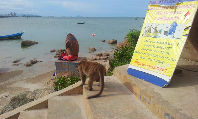 обезьяны около горы Као Такиаб в Хуахине