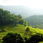 Развлечения и приключения в Чиангмае
