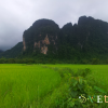 Красота Ванг Вьенга