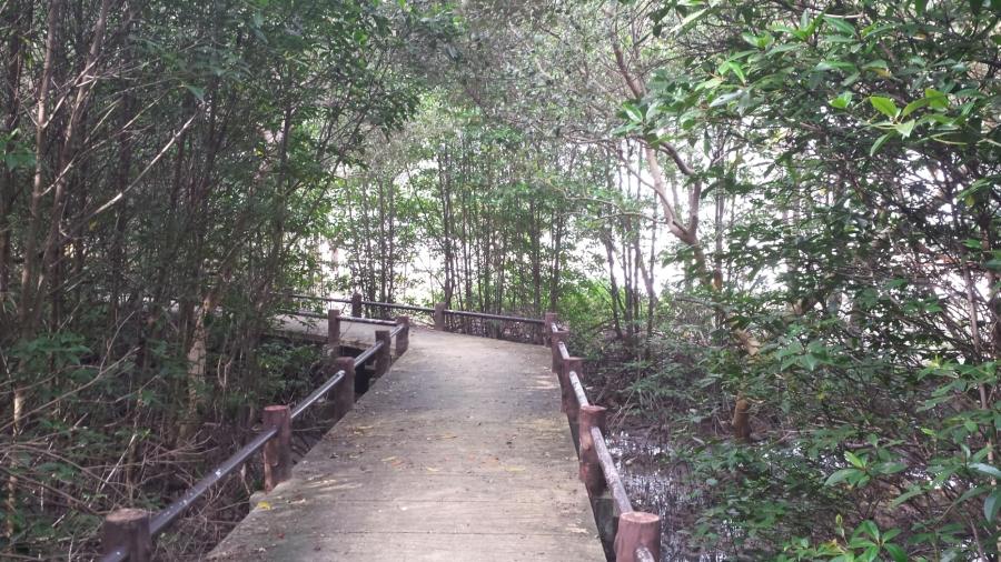Можно прогуляться по мостам между деревьев, а внизу находится небольшое болотце
