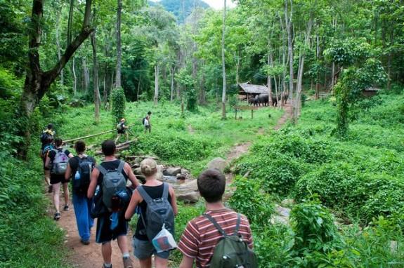 Прыжок в джунгли